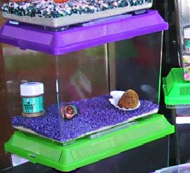 Hermit Crabs - What the Pet Store Never Told You - Mibba