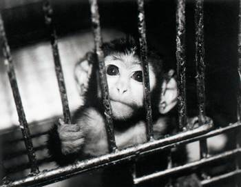 The Cruelty of Animal Testing