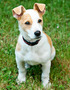 Lucky: The Very Lucky Jack Russell